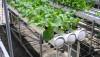 Выращивание гидропонным способом
